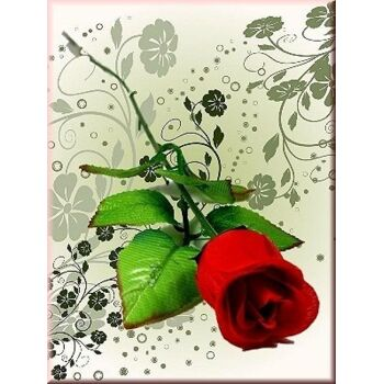 06-0773, Baccara Rose rot 65 cm, mit Blattwerk