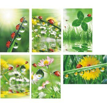 28-400078, Karten Marienkäfer blanco, mit Umschlag